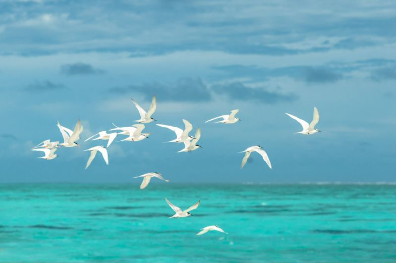 Weiße Möwen fliegen über dem blauen Meer